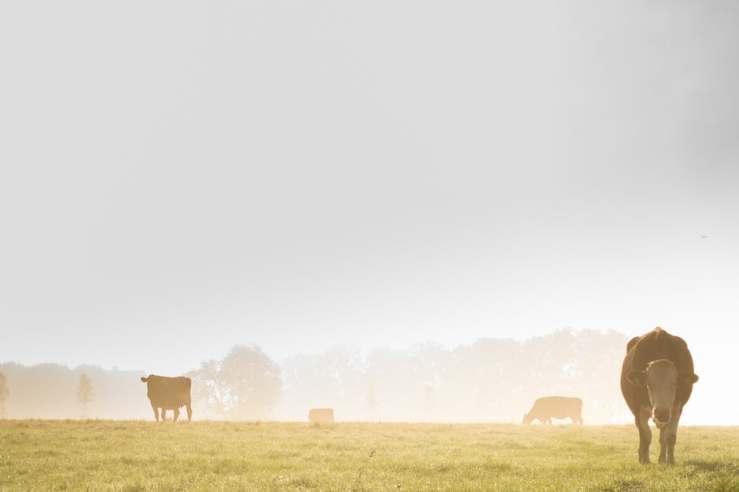 landscape-fog-meadow-mist